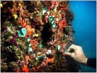 Корал: свойства, цветове, както изглежда и как да се грижи?