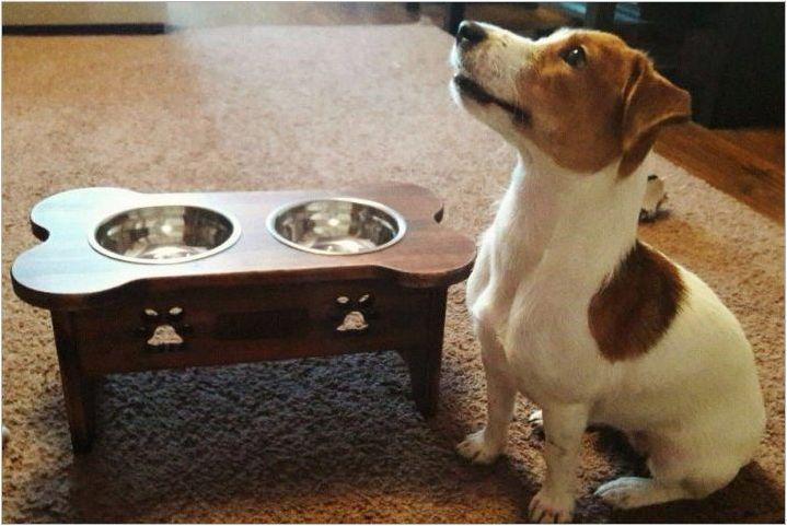 Аксесоари за кучета: Разнообразие от видове и правила за избор