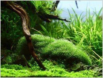 Аквариумни растения: видове, грижи и трева