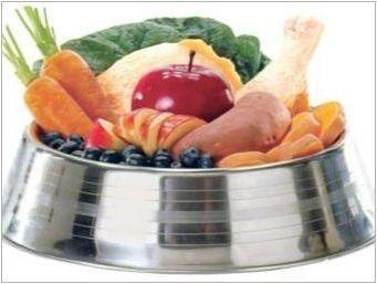 Американски гол териер: характеристики, съдържание и хранене