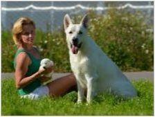 Бял швейцарски овчар: Описание на породата и отглеждане