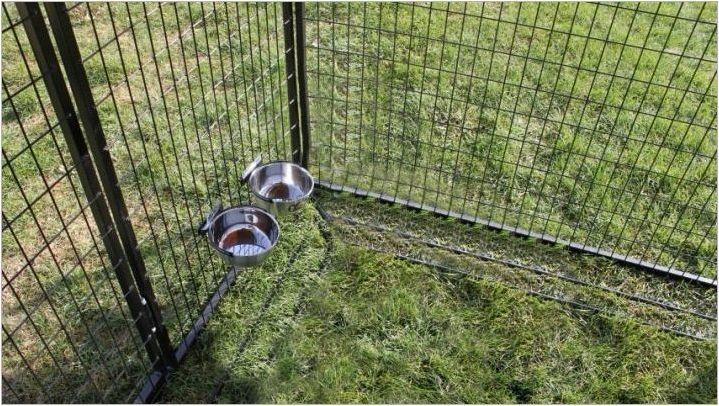 Български овчар: описание, хранене и грижи