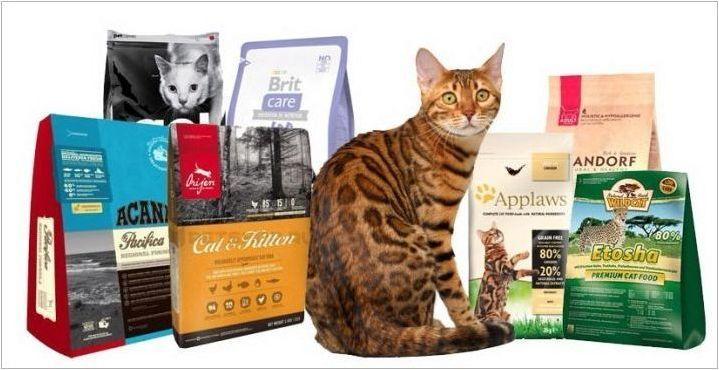 FIFE рейтинг за бенгалски котки