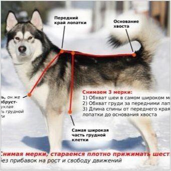 Фрези за кучета: описание на видовете, как да се вземат размера и да научат кучето?