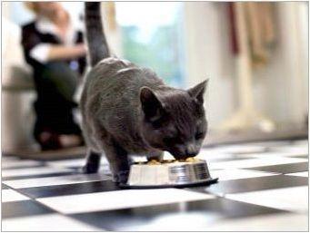 Характеристики, характер и съдържание на британски котки от черен цвят