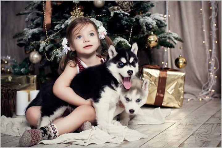 Характеристики и съдържание на кученцата Husky Възраст 3 месеца