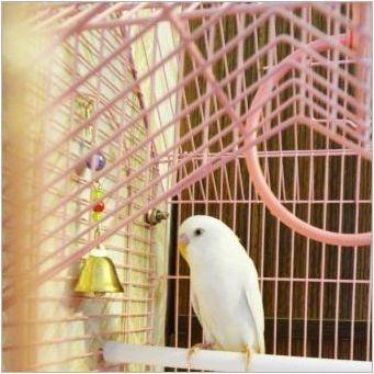 Характеристики на белите вълнообразни папагали