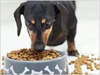 Характеристики на срещата на върха на кучетата
