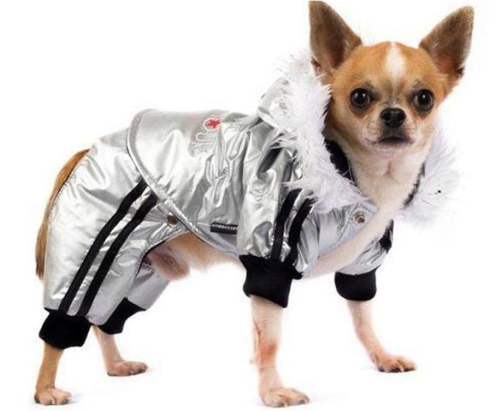 Изберете дрехи за Chihuahua