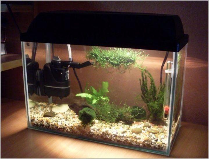 Как да направите външен филтър за аквариума със собствените си ръце?