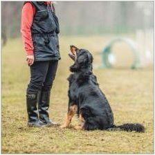 Как да научим екип за кучета & # 181 + лъжа & # 187+?