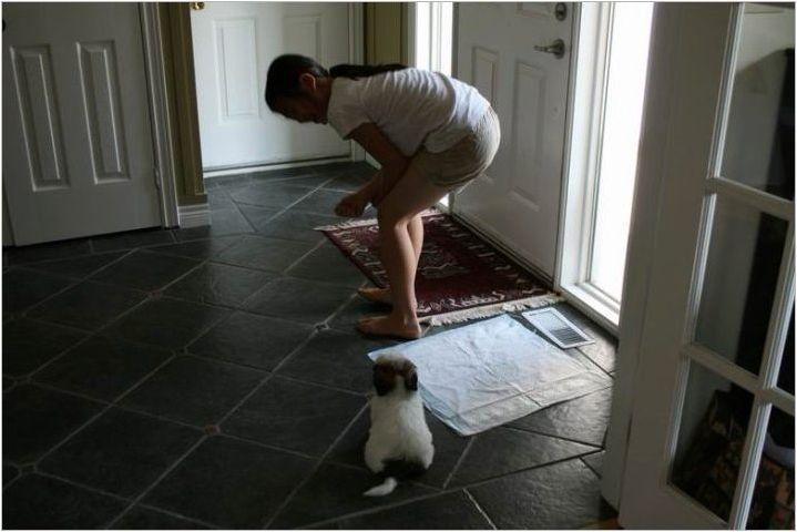 Как да научим куче в тоалетната?