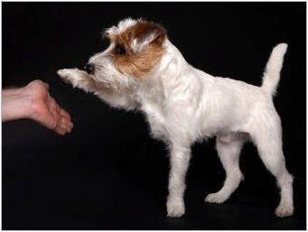 Как да научим куче, за да даде лапа?