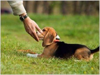 Как да отбия кучето дръпнете каишка?