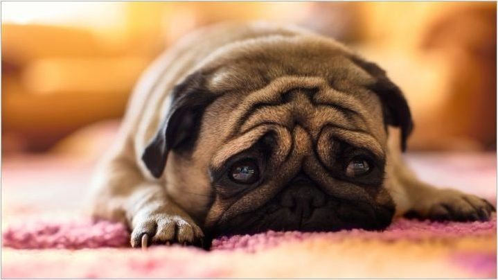 Как да преподаваме екип за кучета & # 171 + Voice & # 187+?