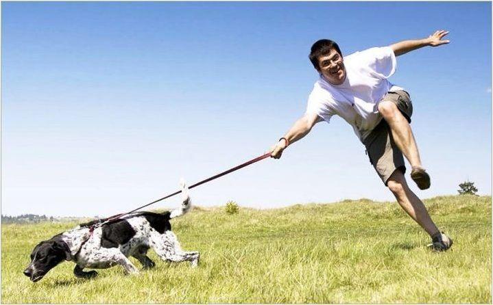 Как да преподаваме екип за кучета & # 187+?