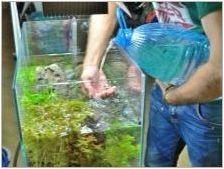 Как и от това, което можете да направите торове за аквариумни растения със собствените си ръце?