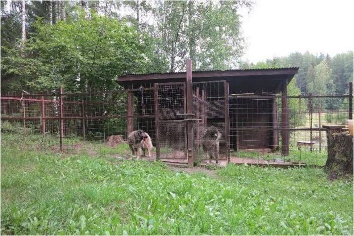 Колко години кавказки овчари живеят и какво зависи?