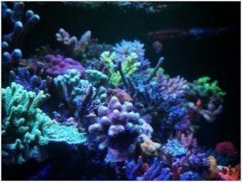 Корали за аквариум: видове и приложение