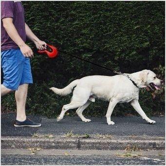 Мярка за каишка за кучета: Как да изберем и използвате?