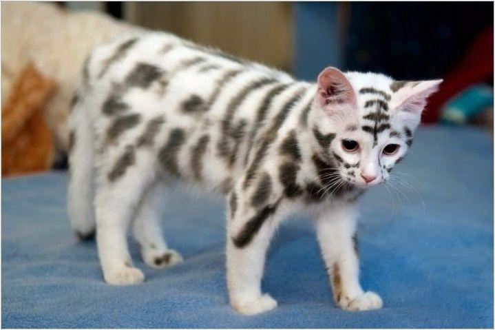 Най-необичайните котки породи