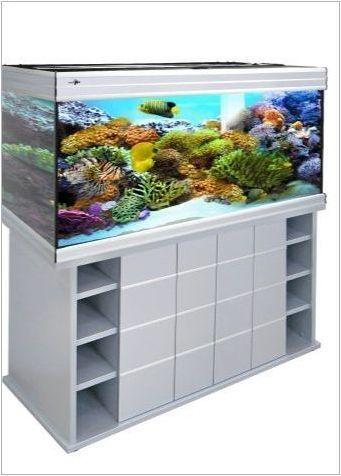 Панорамни аквариуми: функции, разновидности, избор и поддръжка