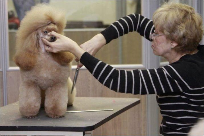 Подстригване на пудел: видове, инструменти и правила