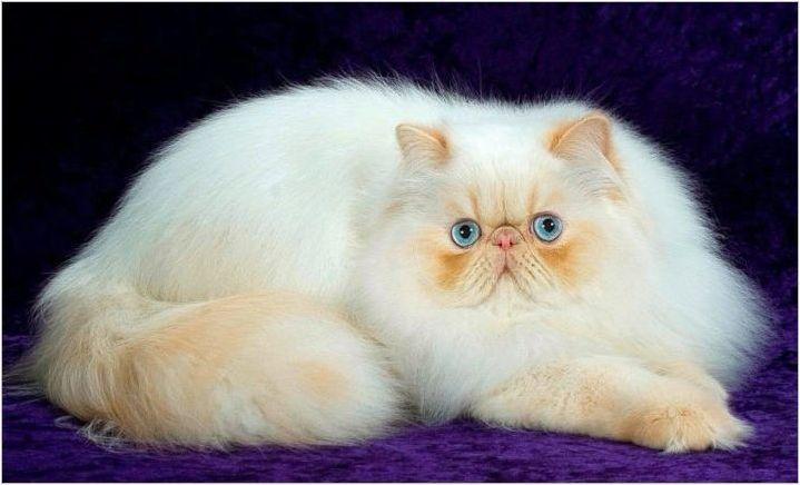 Порода котки с лъскава муцуна