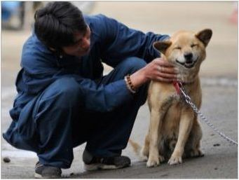 Правила за отглеждане на кученца и възрастни кучета
