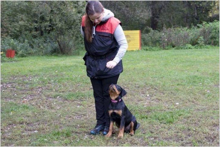Правила за съдържание Rottweiler