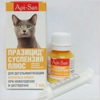 Руски котки: описание, порода, избор и нюанси на грижа