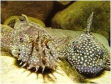 Съдържание на аквариума и грижи за тях