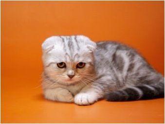 Шотландско котено тегло по месец