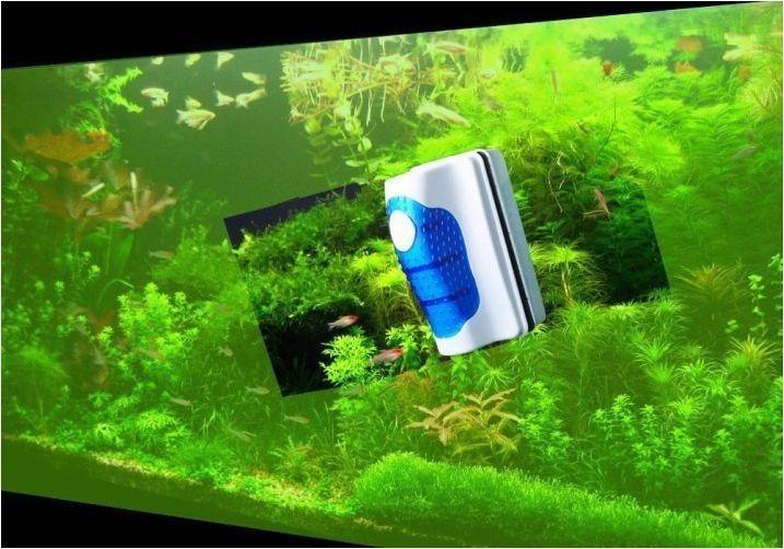 Сини зелени водорасли в аквариума: причини и начини на борба