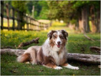 Списък на японските скоби за кучета