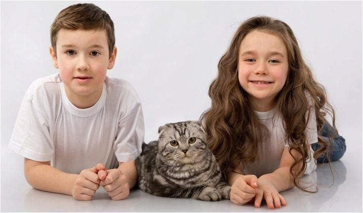 Списък на забавните и красиви имена за шотландска котка