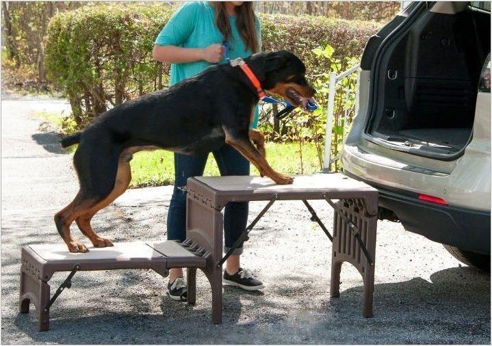 Стълби за кучета: Какво е и как да изберем?