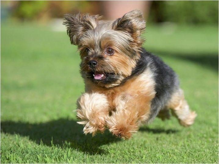 Усъвършенствани псевдоними за кучета от две или повече думи