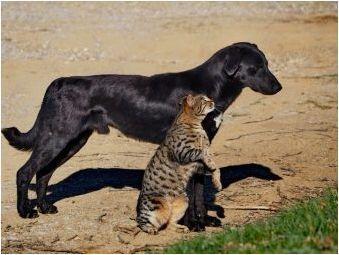 Всичко, което трябва да знаете за котките на алерната порода