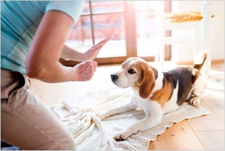 Възможно ли е да накажете кучето и как да го направите правилно?