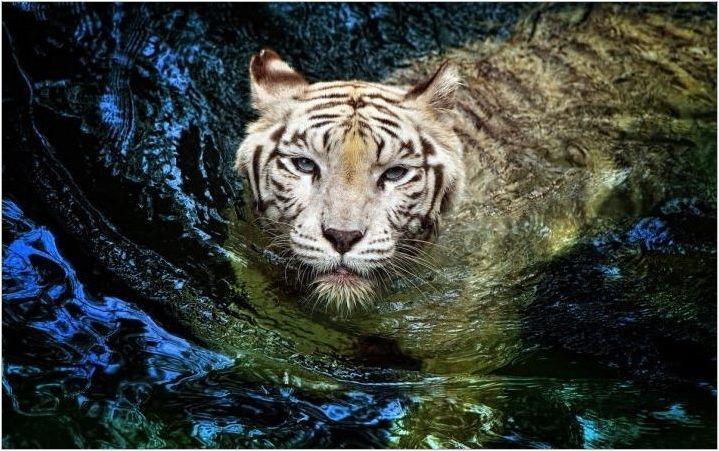 1962 - Година на животното и какво е характерно за него?