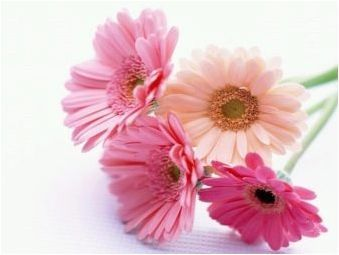 Изберете цветя за жена Телец
