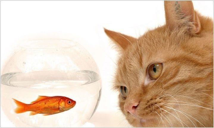 Риба, родена в годината на котката: Какви са те в живота и любовта?