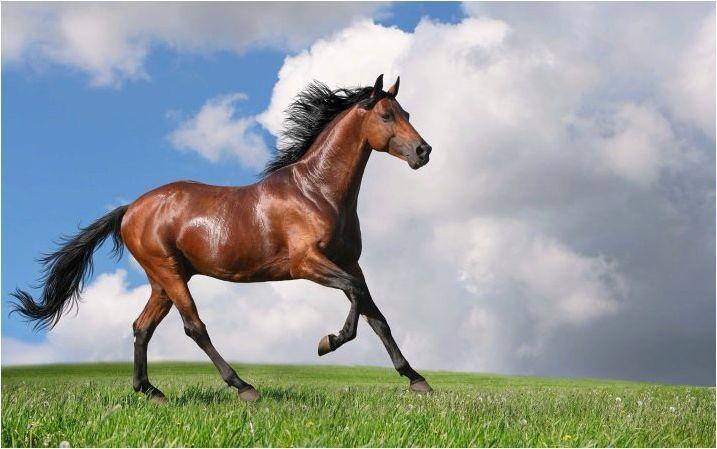 Съвместимост на плъха и коне