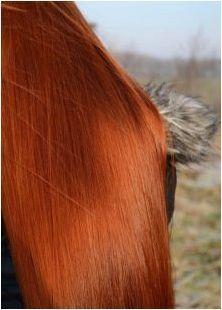 Всичко за червената коса