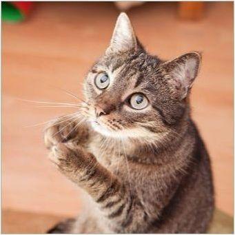 Какво мога да дам котка?