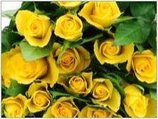 Букет от булки от хълм рози: дизайн и комбинирани идеи с други цветове