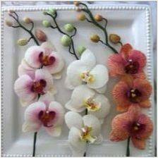 Осъществяване на орхидеи от пяна