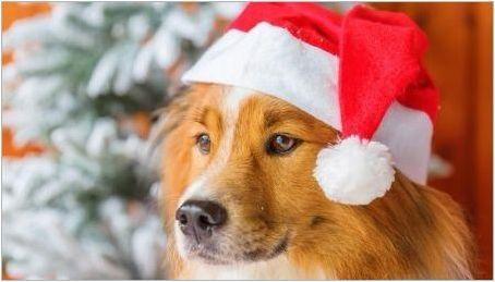 Година на кучета: характеристики и съвместимост