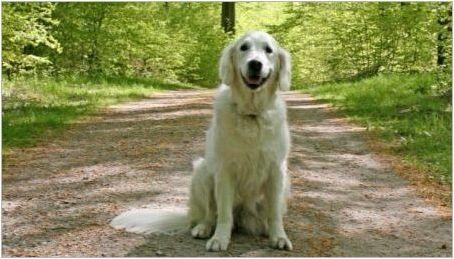 Как да преподаваме кучето екип & # 171 + Sit & # 187+?